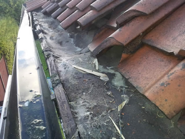 Guttering Before - clogged and water-stained