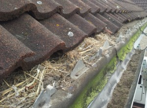 Roofline Repairs-check for old bird nests