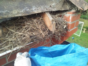 Roofline Ripping Out - clearing out nests